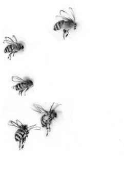 sometimesdrawn_sidebar_bees240