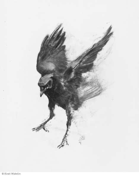 drawing_birds_commoncrow2_700pxVert