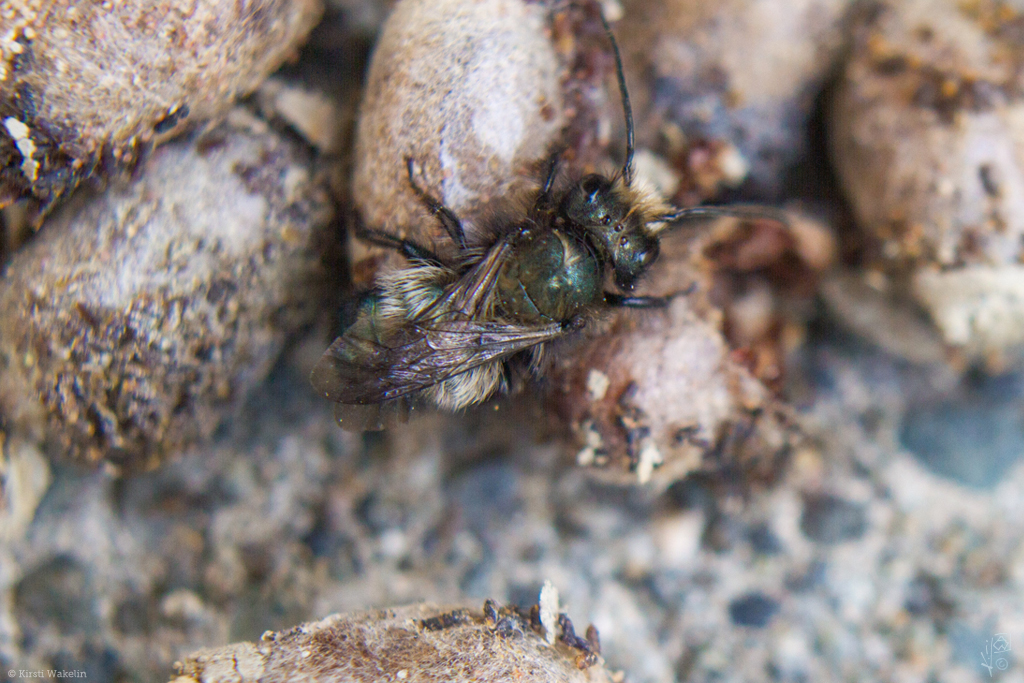 films_photos_masonbee1