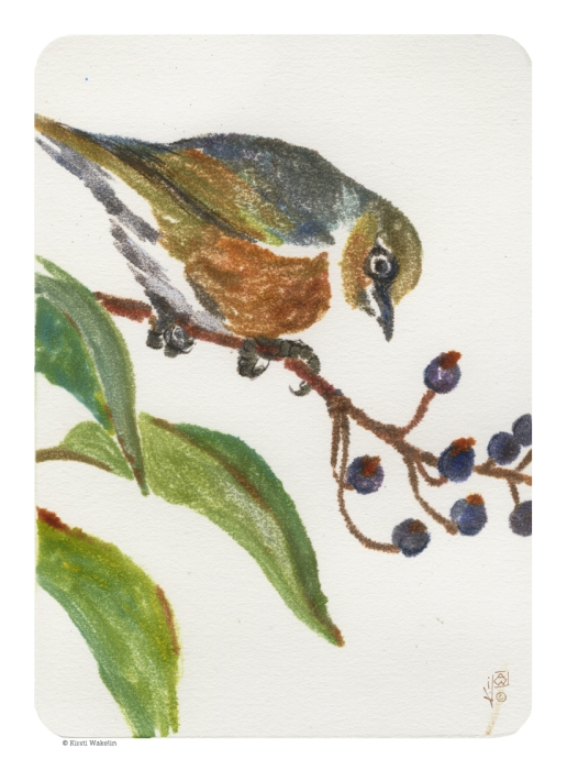 Sketch_Monotype_silvereye_1024
