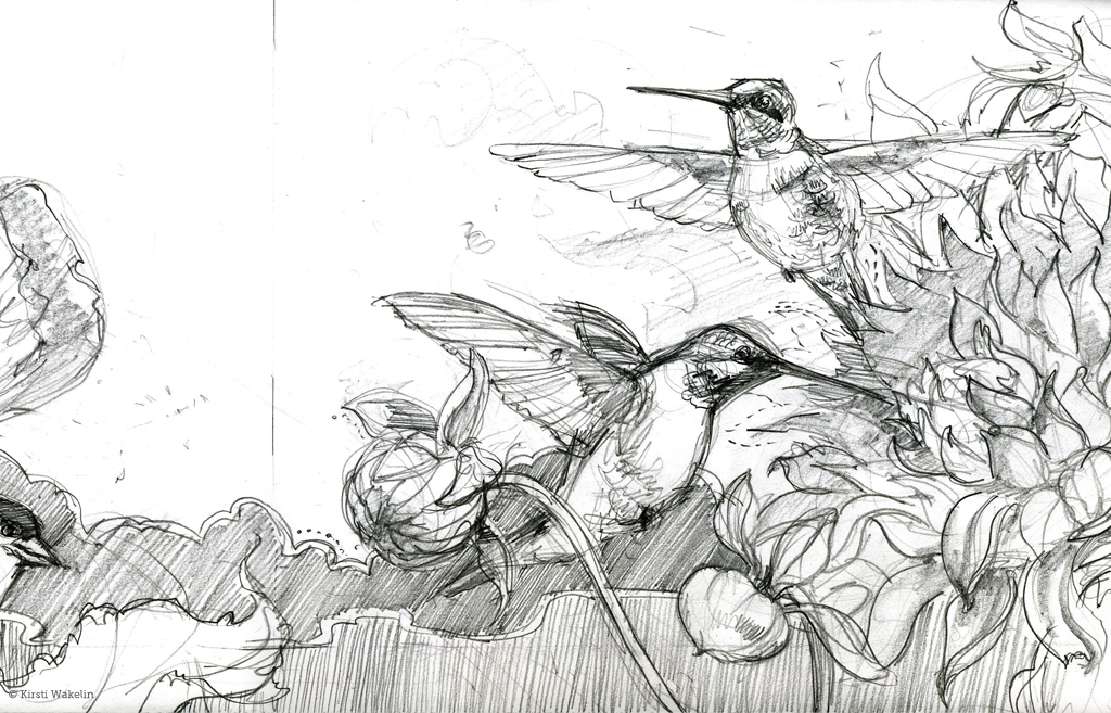 SKETCH_hummingbirds_panel_det1_1024
